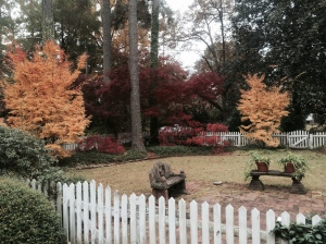 Our backyard fall 2014
